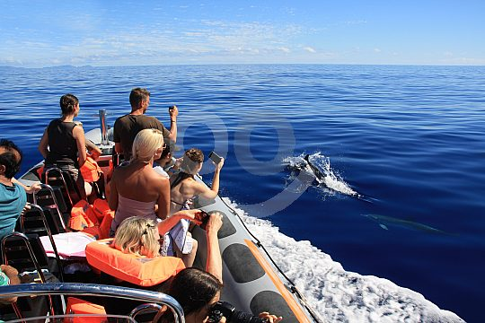 dolphin boat tour in Madeira
