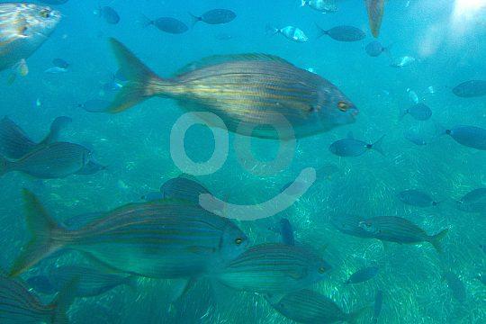 Underwater World Mallorca