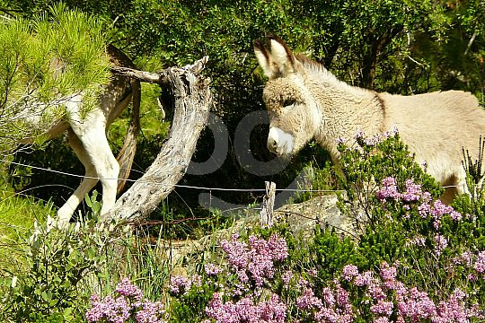 Animal companions for hiking in Majorca