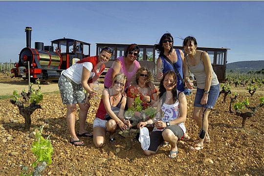 wine tasting in Mallorca group