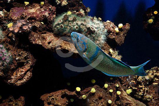 Aquarium Mallorca fishes
