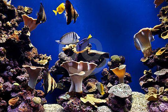 Palma Aquarium Majorca