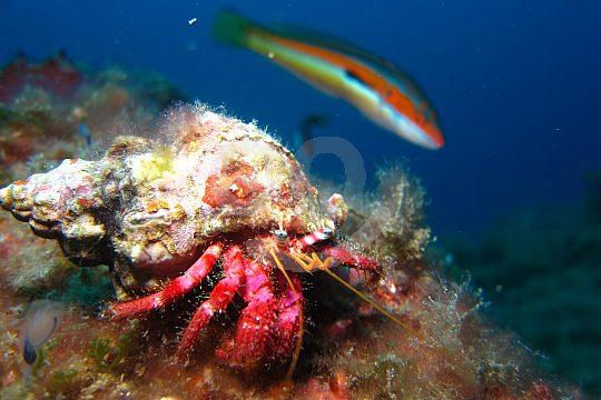 crab and fish at the snorkel tour