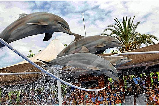 dolphin show marineland portals nous