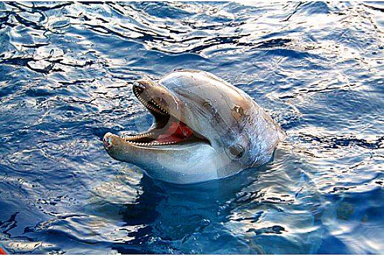 dolphin in Marineland pool
