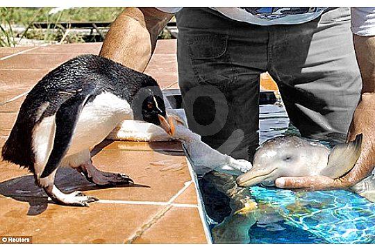 animal babies in Majorca