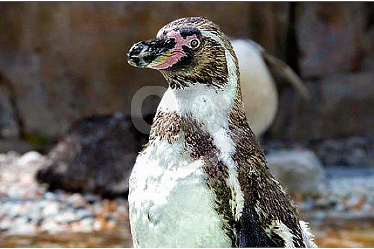penguin in marineland portals nous
