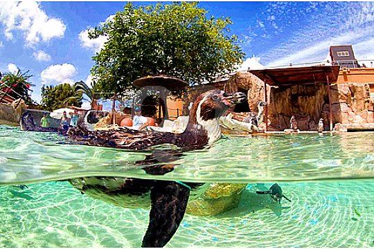 tour to Marineland Mallorca with penguins