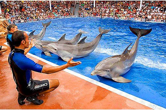 mallorca dolphin show in Marineland