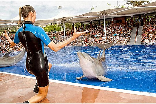 trainer at the dolphin pool