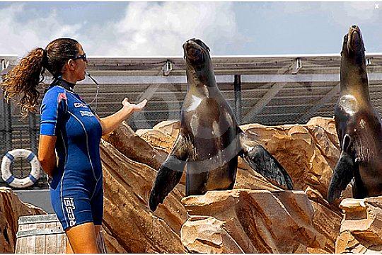 sea lion show in Mallorca