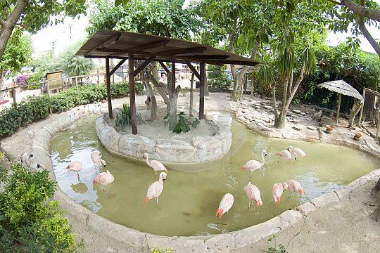 Flamingos in the aqua zoo Marineland in Portals Nous