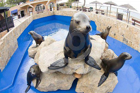 The seals of Marineland in Costa d´en Blanes