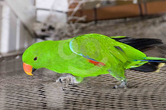 A parrot from the bird house in Marineland Mallorca