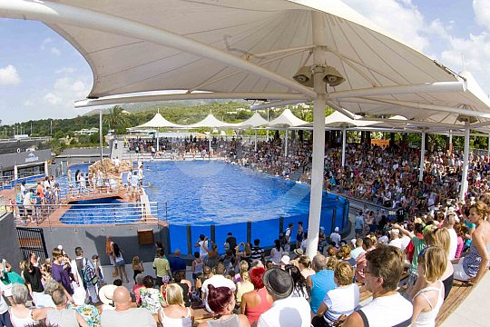 Show arena for the dolphin show Mallorca
