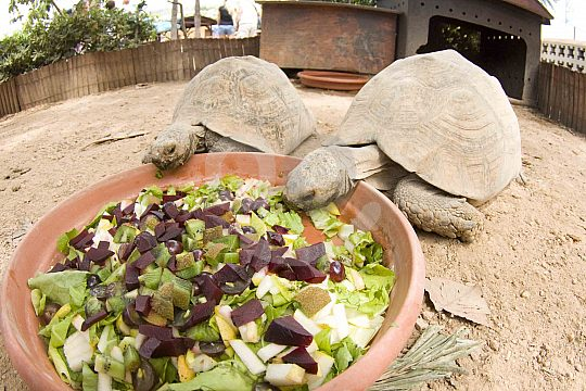 The Marineland Mallorca is also home to turtles