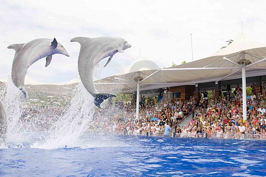 Dolphins in Marineland Mallorca