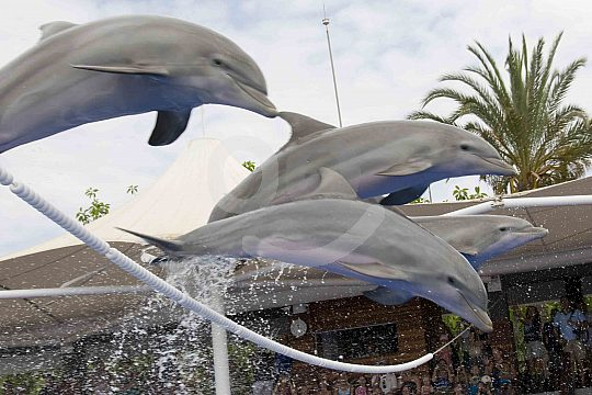Dolphin-Show Mallorca in Marineland Portals Nous