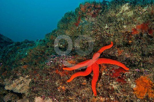 Starfish in the Algarve