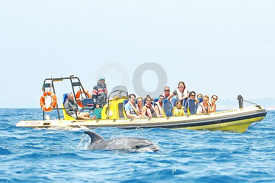 Dolphins in the Algarve by boat