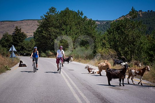 bicycle tour Peloponnese mountain goats