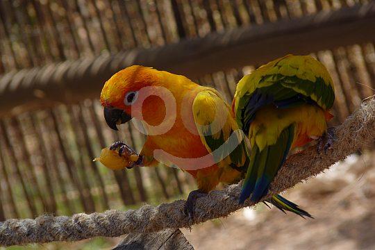 Papagei im Terra Natura Park