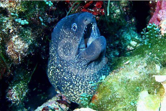 Underwater world Menorca diving