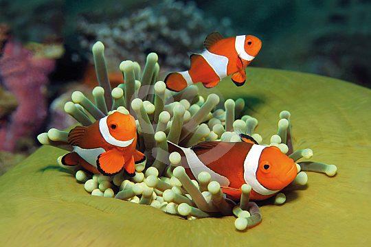 Palma Aquarium clown fish
