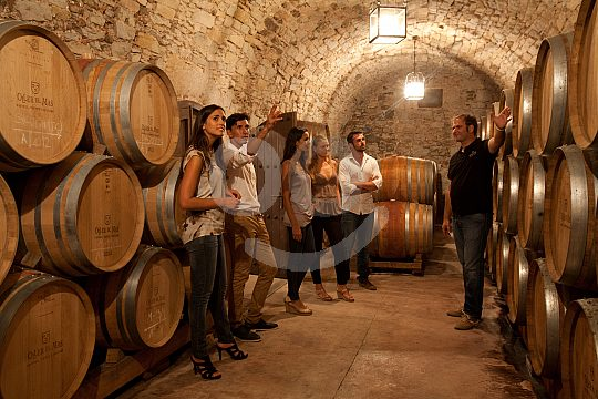 wine cellars of Oller del Mas