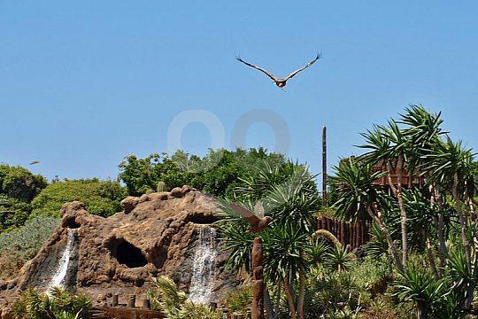 birds of prey show in Rancho Texas Lanzarote Park