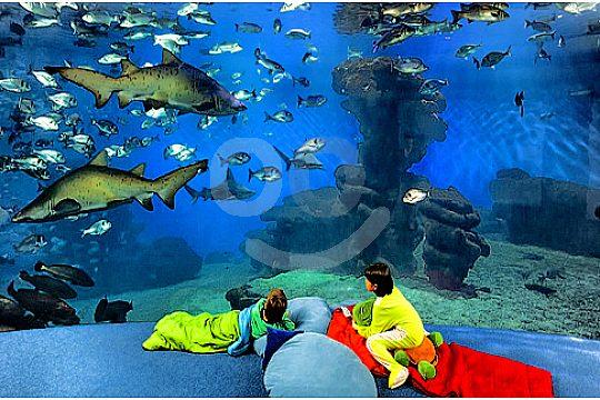 palma aquarium tour children watching fish