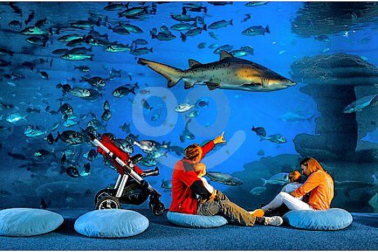 palma aquarium family watching sharks