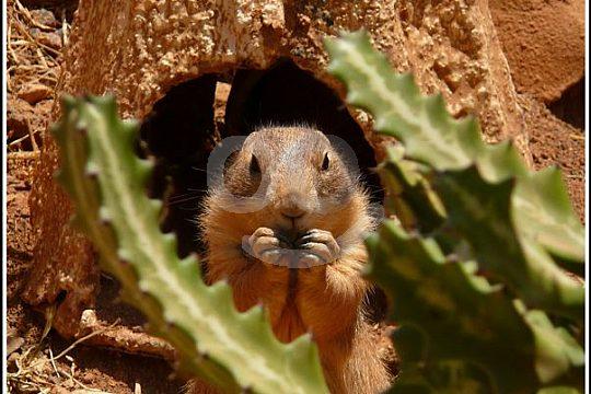 Rancho Texas Lanzarote Park animal encounter
