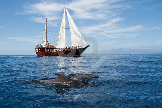 Dolphin watching Tenerife