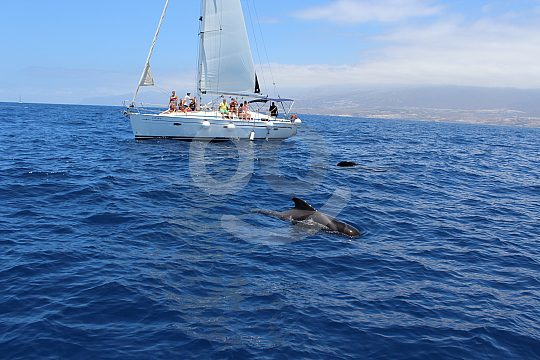sailing boat charter from Playa de las Americas