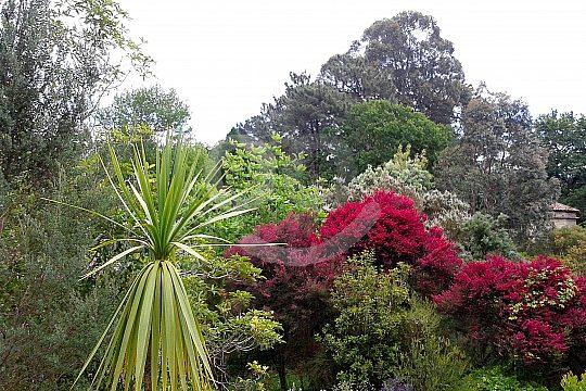 Foliage in Pontevedra
