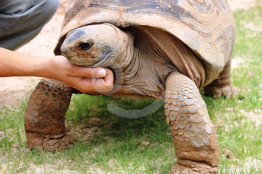turtle in the zoo in Puerto del Carmen