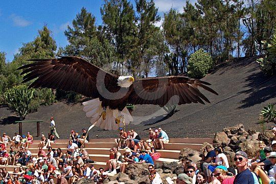 Tickets for Rancho Texas Park Lanzarote bird show