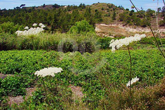 hike in Rhodes through beautiful landscape