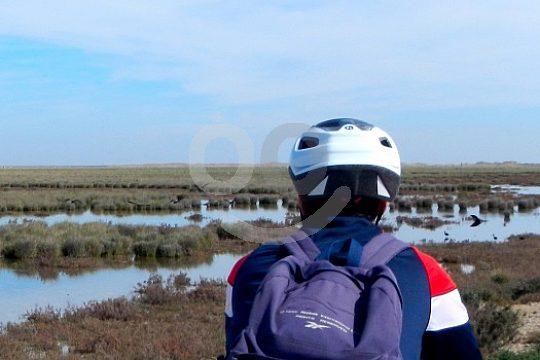 bike tour Doñana Natural park