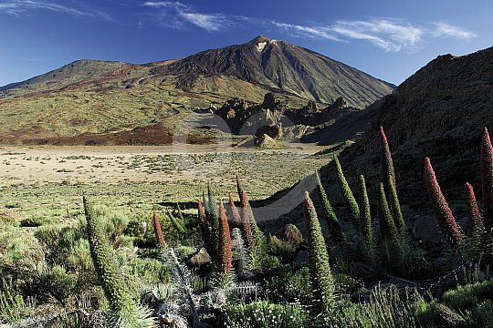 beautiful Santa Cruz Teide tour