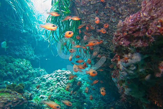 diversity of species in the marine reserve Tabarca
