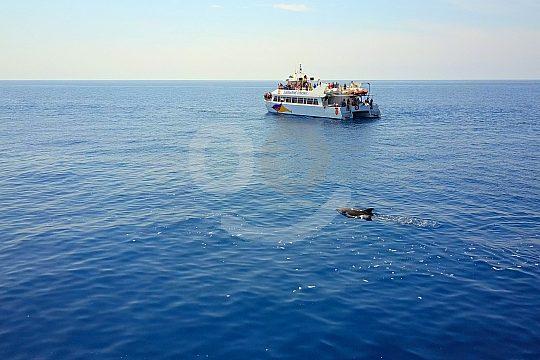 the Santa Ponsa dolphin watching tour