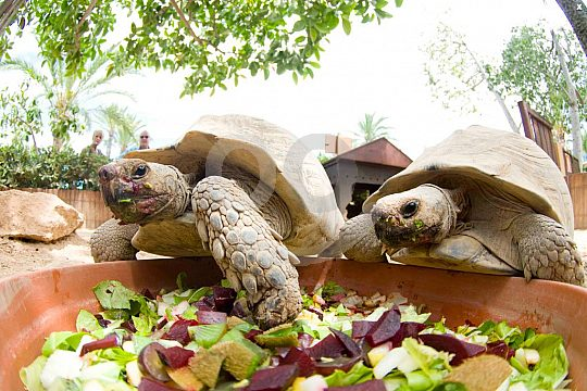 Turtles in Marineland