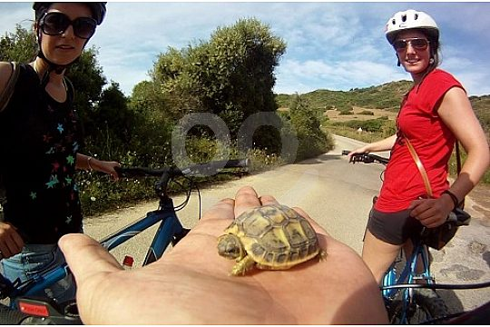 Discover tortoise at the mountain bike tour in Menorca