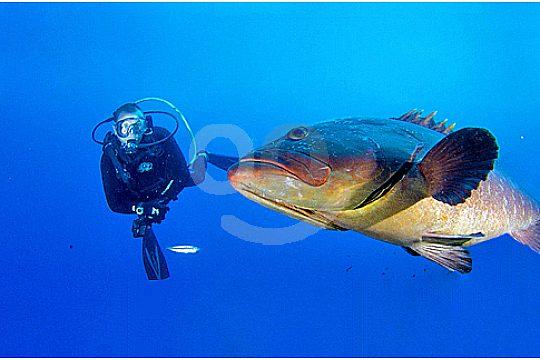 scuba diving in Santa Ponsa