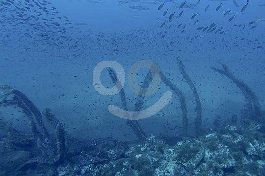 Scuba Diving on Menorca
