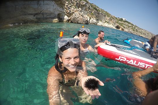 discover sea urchins snorkeling
