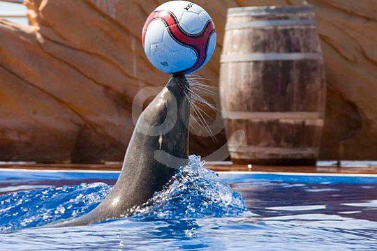 Sea lion show in Marineland Portals Nous