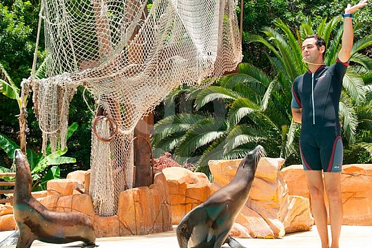 Seelöwen im Jungle Park